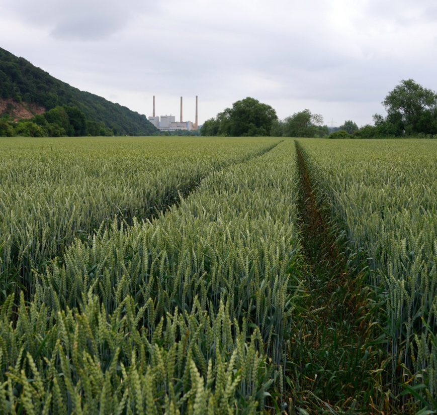 The wheat field ... and a coal power station in the background!